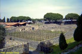 Mastroberardino Vineyard in Pompeii